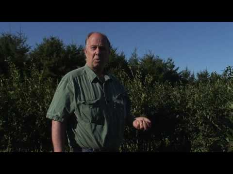 Super-Organic Blueberries Nutrition from healthy soil.