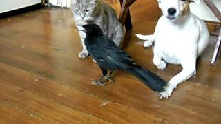 Download BIRD FEEDS CAT & DOG - Mp3 and Videos