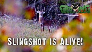 good-news-slingshot-lives-we-re-back-on-the-hunt