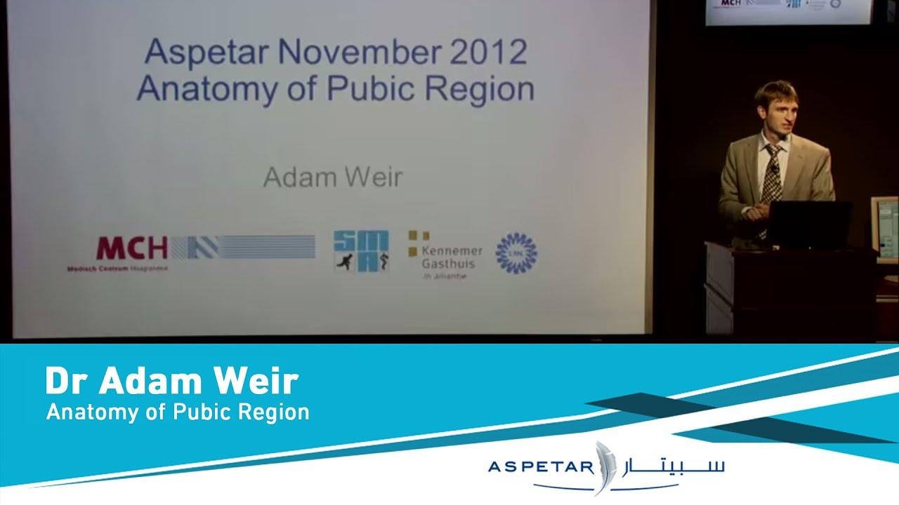 Anatomy of Pubic Region by Dr Adam Weir - YouTube