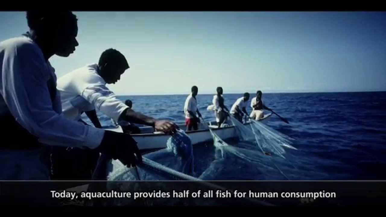 The state of world fisheries and aquaculture 2014 youtube the state of world fisheries and aquaculture 2014 sciox Gallery