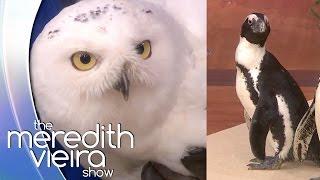 Winter Wonderland Animals! | The Meredith Vieira Show