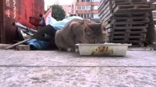 20121229  美貓媽 守護孩子  流浪貓家庭日記 Stray cat family diary