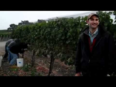 Ben Merz at Vogelzang Vineyard