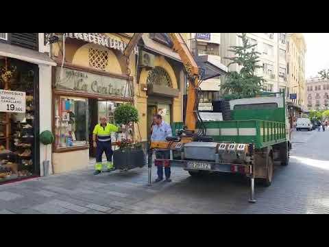 Colocación de los maceteros móviles en la calle Foro Romano