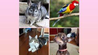 Все животные *появились новые питомцы!?*