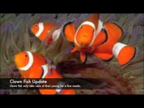 Marine Animals and their Offspring