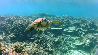 LEI Update- Marine Life Galore Thumbnail