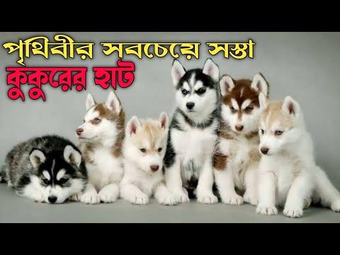 ALL DOGS PRICE IN GALIFFSTREET PET MARKET KOLKATA Full HD