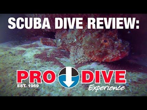 Dive with PRO DIVE SYDNEY?