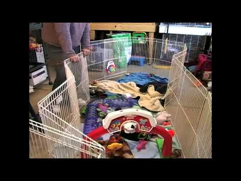 Setting Up an Exercise Pen for Your Pet Ferret