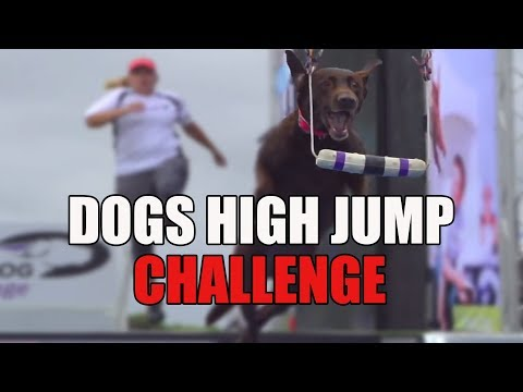 Full Fetch It Competition   2019 Purina  Incredible Dog Challenge Western Regionals