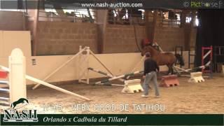 N°65 - Very Good de Tatihou, jument a vendre par Orlando