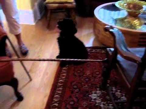 Mitzi The Wonder Dog-Jumping Skills!!!