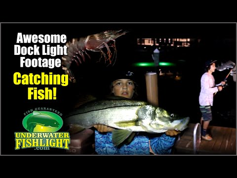 awesome dock light fishing footage! - youtube, Reel Combo