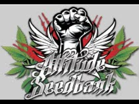 ATTITUDE  SEEDBANK DELIVERY AND REVIEW 2017