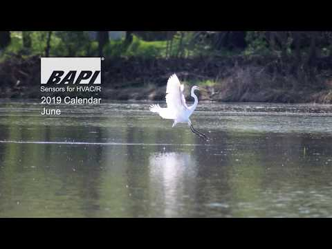 BAPI 2019 Calendar, June - Large Birds of the Kickapoo