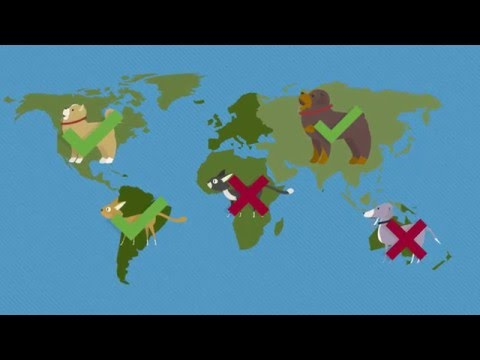 International Pet Relocation & Reasons To Use A Pet Travel Agent