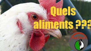 Quels aliments donner aux poules et poulets