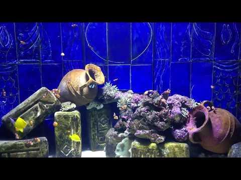 Океанариум Музей подводного мира в Дубае | The Lost Chambers Aquarium, Dubai