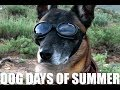 Dog Days of Summer | How to PCS Your Pets