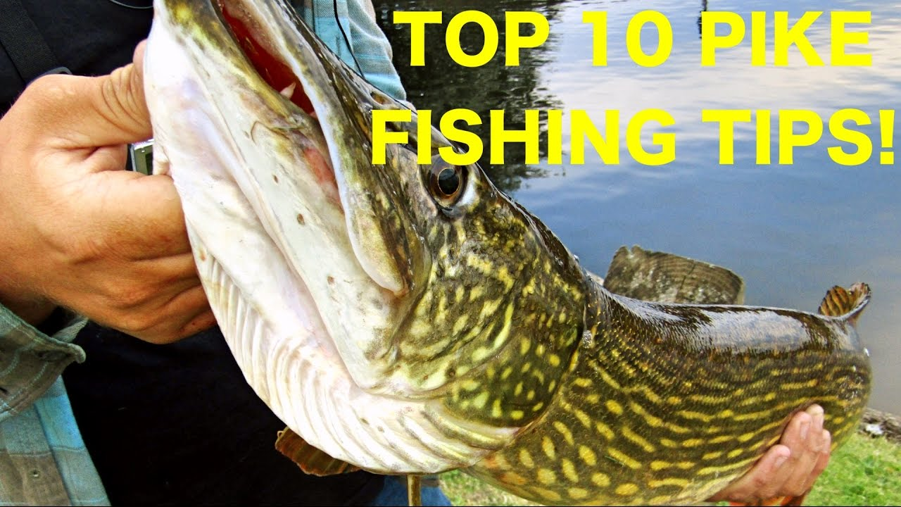 10 Tips to help you catch more pike on lures! Pike fishing ...