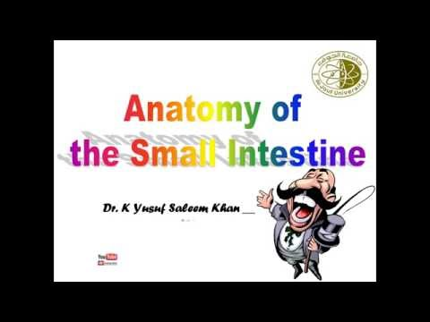 Anatomy Lecture on Small Intestine ........ by Dr. Yusuf