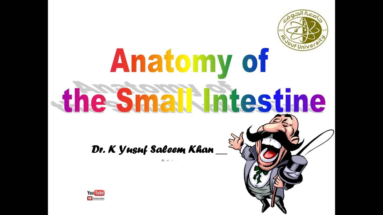 Anatomy Lecture on Small Intestine ........ by Dr. Yusuf - YouTube