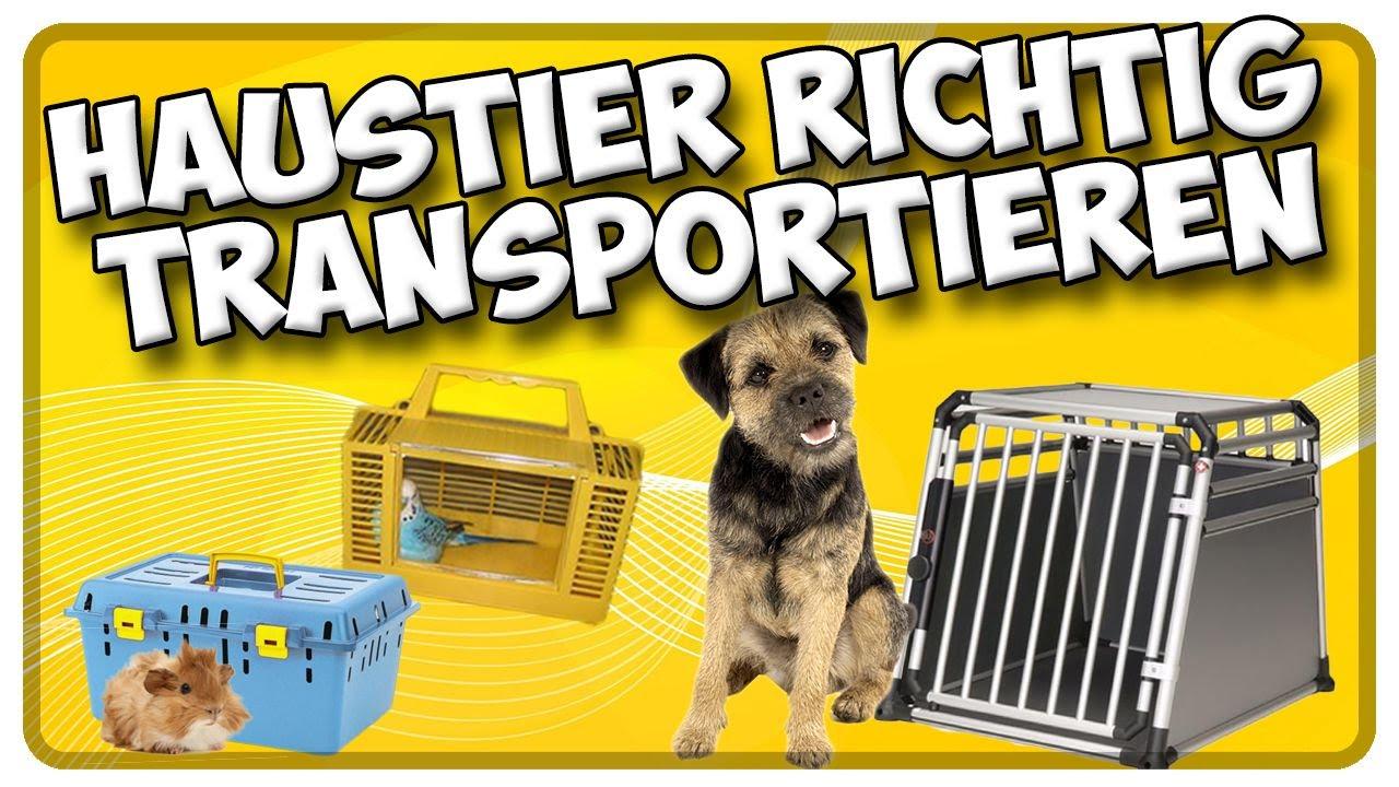 transport von hund katze und kleintieren im auto so transportiere ich mein haustier richtig. Black Bedroom Furniture Sets. Home Design Ideas