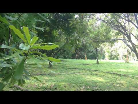 Artist's Retreat and rainforest spa