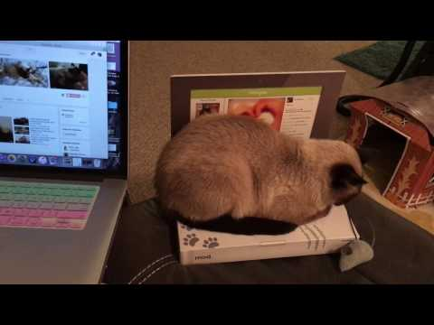 Now My Cat Will Stop Pestering me on my Laptop! Laptop Cat Toy!