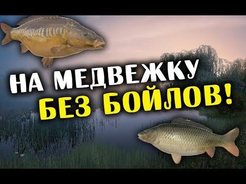 РУССКАЯ РЫБАЛКА 4. Фарм серебра на озере Медвежье. Карп Зеркальный, Голый и Обыкновенный