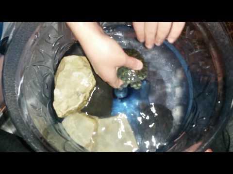 Kaplumbaga Bakim Temizlik Ve Eglenceli Hareketleri Eglenceli Cocuk Oyun Su