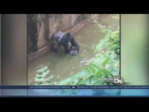 Boys Falls Into Gorilla Exhibit