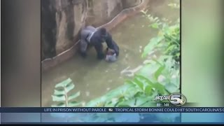 Boys Falls Into Gorilla Exhibit by : WKRG