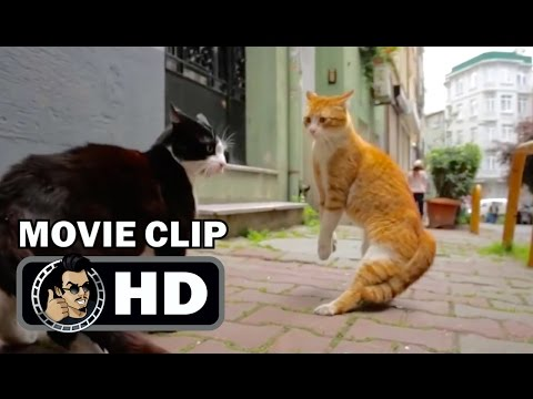 KEDI Movie Clip - Fighting For Territory (2017) Cat Documentary HD