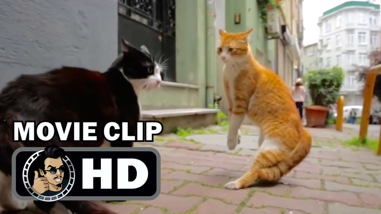kedi movie clip fighting for territory 2017 cat