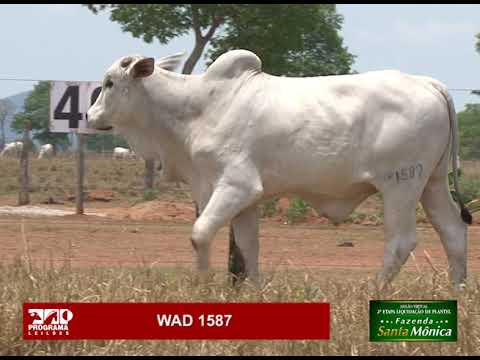 LOTE 46 - WAD 1587