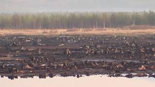 Весенняя охота 2019г. Весенняя природа Андрюшинского водохранилища. Северный Урал