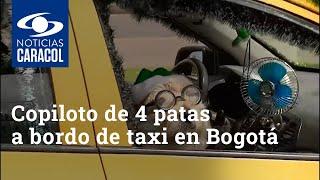 Copiloto de 4 patas roba sonrisas a bordo de taxi en Bogotá