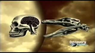 El Troodon ¿qué hubiera pasado si no se hubiera extinguido