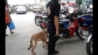 Manalo K9 Units On Duty (vintage Video)