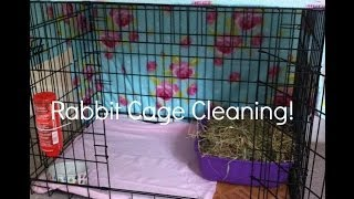 Rabbit Cage Cleaning!