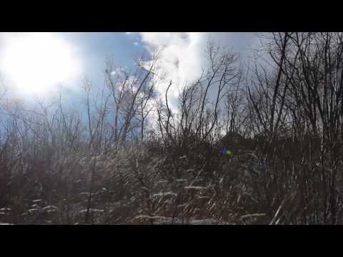 Strong Howling Wind Sound 8 Hours / Swaying Trees in The Wind