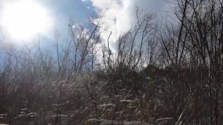 Download Video Strong Howling Wind Sound 8 Hours / Swaying Trees in The Wind MP3 3GP MP4