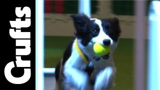 Flyball - Team Semi Finals - Highlights - Part 2 - Crufts 2012