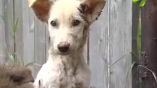 В Ноябрьске ищут дом для спасенных собак