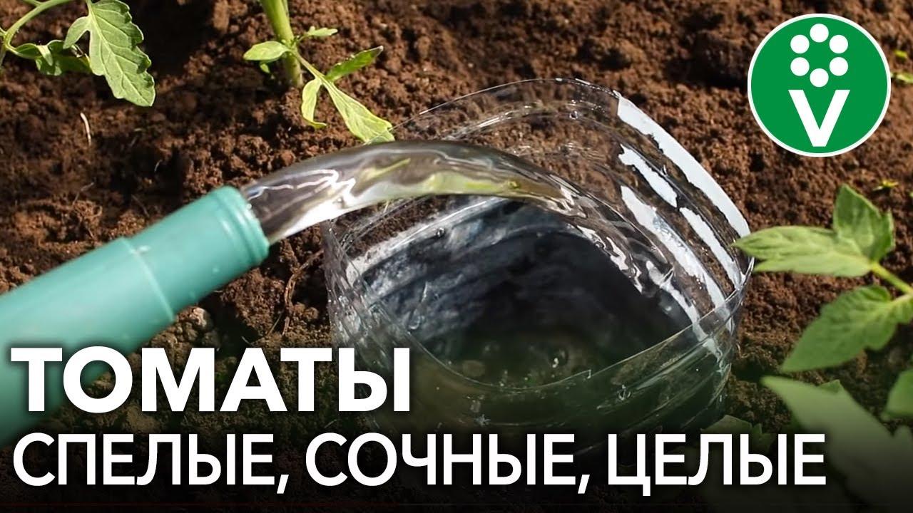 томаты не пасынкуемые для теплиц