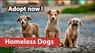 Don't Let these dogs die - world animal protection