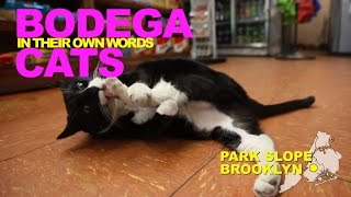 Bodega Cats In Their Own Words: Victoria and Sheeba of Park Slope, Brooklyn thumbnail